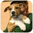 Photo 1 - American Pit Bull Terrier Mix Puppy for adoption in Berkeley, California - Bilito