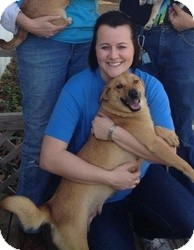 Husky/Shepherd (Unknown Type) Mix Dog for adoption in Marlton, New Jersey - Trixie