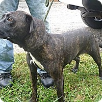 Adopt A Pet :: #400-13  RESCUED! - Zanesville, OH