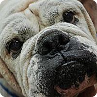 Adopt A Pet :: Edith - Winder, GA