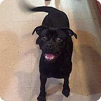 Adopt A Pet :: Cindy Lou - Russellville, KY