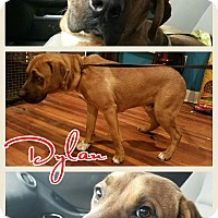 Adopt A Pet :: Dylan-pending adoption - Manchester, CT