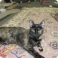 Adopt A Pet :: PB Binx - Cannon Falls, MN