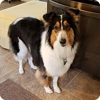 Adopt A Pet :: Josie - Powell, OH