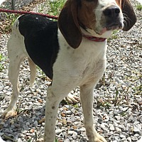Adopt A Pet :: Reva - Morehead, KY