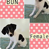 Adopt A Pet :: Honey Bun-pending adoption - Manchester, CT