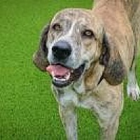 Adopt A Pet :: Ty - West Palm Beach, FL