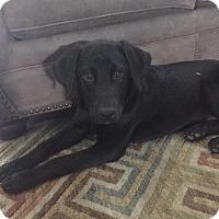Adopt A Pet :: Waylon - Dallas, TX