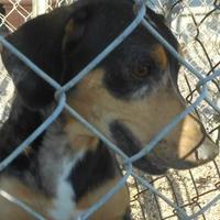 Adopt A Pet :: quinn - Opelousas, LA