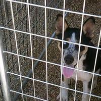 Adopt A Pet :: Ricky - Opelousas, LA