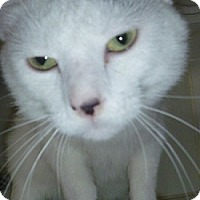 Adopt A Pet :: Desi - Hamburg, NY