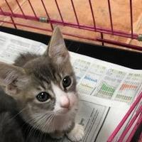 Adopt A Pet :: Yates - Miami, FL