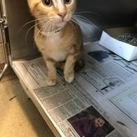 Adopt A Pet :: Volcom - Miami, FL