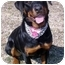 Photo 2 - Rottweiler Dog for adoption in Huntington, New York - Sally