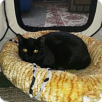 Adopt A Pet :: Buttons - Whitestone, NY
