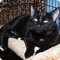 Adopt A Pet :: Jude B - Sacramento, CA