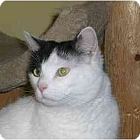 Adopt A Pet :: Duke Doublestuff - Lombard, IL
