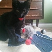 Adopt A Pet :: Manny - Vancouver, BC