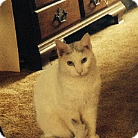 Adopt A Pet :: Jake - Bayonne, NJ