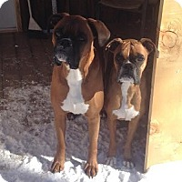 Adopt A Pet :: Lincoln and Sierra - Hamilton, ON