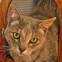 Adopt A Pet :: Penny - Lancaster, CA