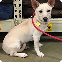 Adopt A Pet :: PJ - Irmo, SC