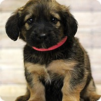 Adopt A Pet :: Krabby - Waldorf, MD
