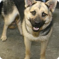 Adopt A Pet :: Athena2 - Philadelphia, PA