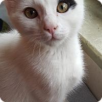 Adopt A Pet :: Taittinger Sparkly Personality - Studio City, CA