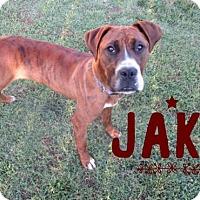 Boxer Dog for adoption in Great Bend, Kansas - Jake