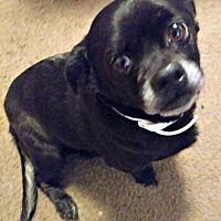 Adopt A Pet :: Jedi - Grapevine, TX