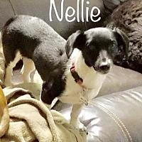 Adopt A Pet :: Nellie - Los Angeles, CA