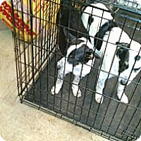 Adopt A Pet :: Katie - Conway, AR