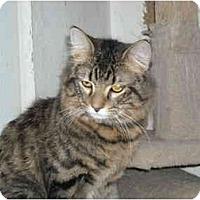 Adopt A Pet :: Molson - Arlington, VA