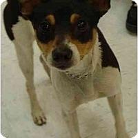 Adopt A Pet :: Lexie - Fowler, CA