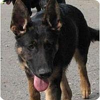 Adopt A Pet :: Brago - BC Wide, BC
