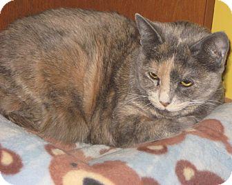 Domestic Shorthair Cat for adoption in Anchorage, Alaska - Matilda