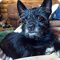 Adopt A Pet :: Laney - Morgantown, WV