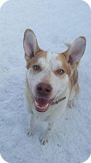 Husky/Husky Mix Dog for adoption in Saskatoon, Saskatchewan - Murdoch