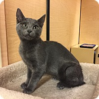 Adopt A Pet :: Lexi - Jackson, NJ