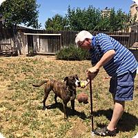 Adopt A Pet :: Maxi, amazing boy - Sacramento, CA