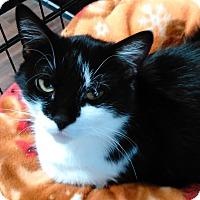 Adopt A Pet :: Nova - Cloquet, MN
