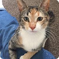 Adopt A Pet :: Kahula - Troy, MI