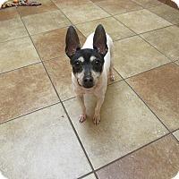 Adopt A Pet :: Aksel *Petsmart GB* - Appleton, WI