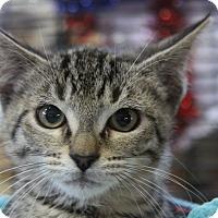 Adopt A Pet :: Lorenzo - Sarasota, FL