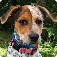 Adopt A Pet :: Crescent - Allentown, PA