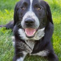 Adopt A Pet :: Pepper - Sherwood Park, AB