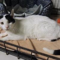 Adopt A Pet :: Toby Frost - Westville, IN