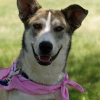 Adopt A Pet :: Roxie - Amarillo, TX