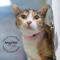 Adopt A Pet :: Formosa - Cheyenne, WY
